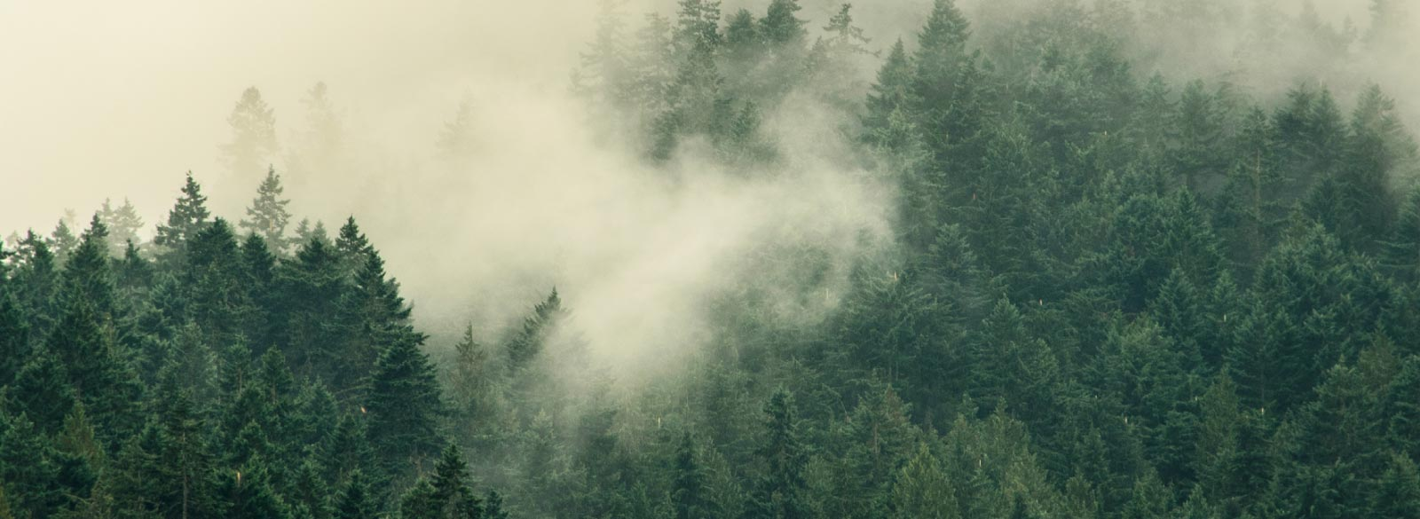 The morning fog lingers across the tree tops.